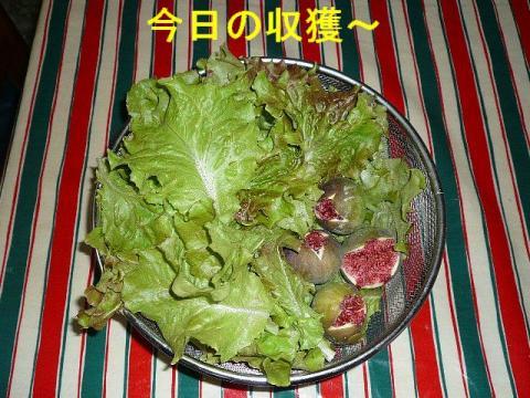 yasai_20081011_11