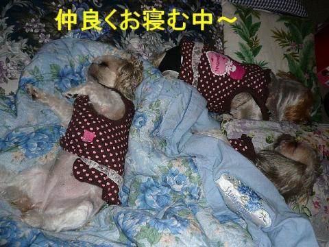oyako_20081011_11
