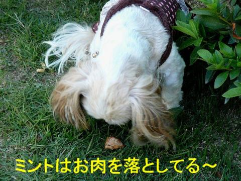 mint_20081016_4