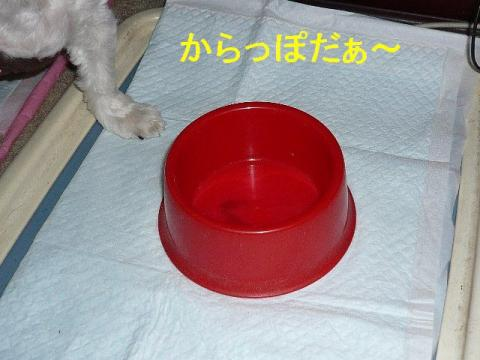 mizu_20081021_1
