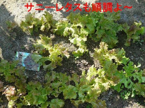 yasai_20081018_1