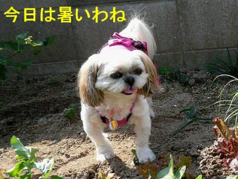 mint_20081018_4