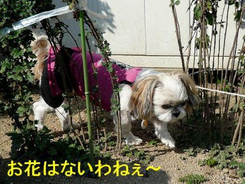 mint_20081018_3