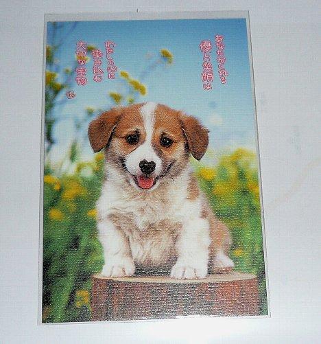 card_20081027_3