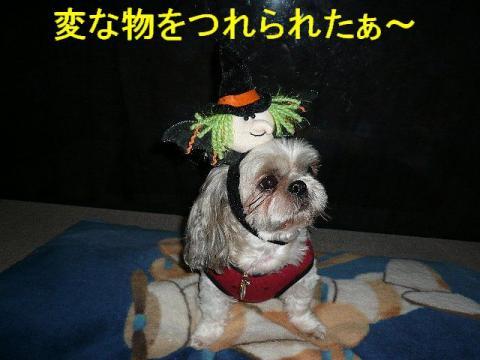 love_20081030_1