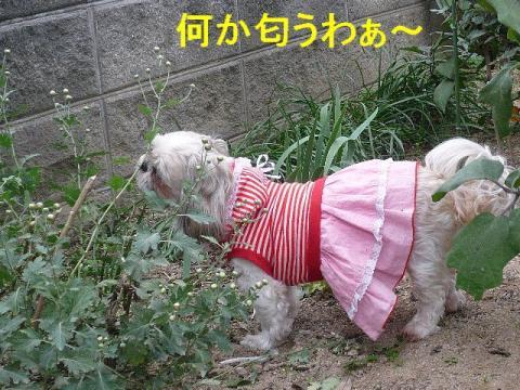 love_20081106_1