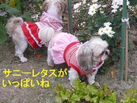 lovemint_20081106_3