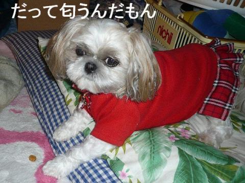 mint_20081108_2