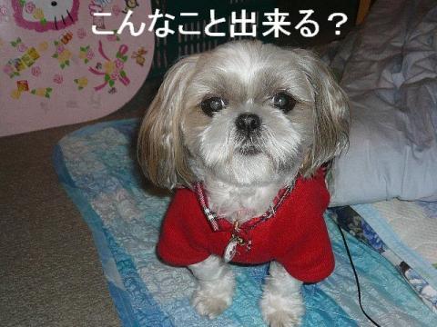 mint_20081111_6