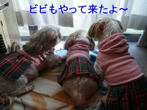 oyako_20081116_1