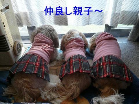 oyako_20081116_2