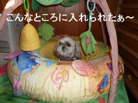 mint_20081122_2