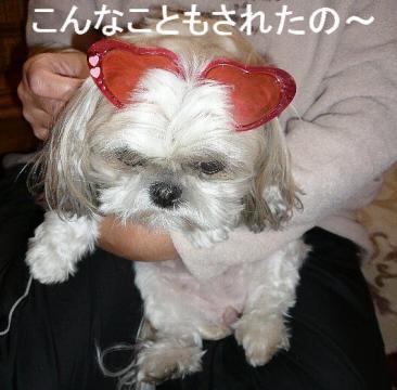 mint_20081122_3
