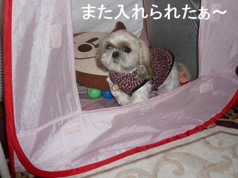 mint_20081122_5
