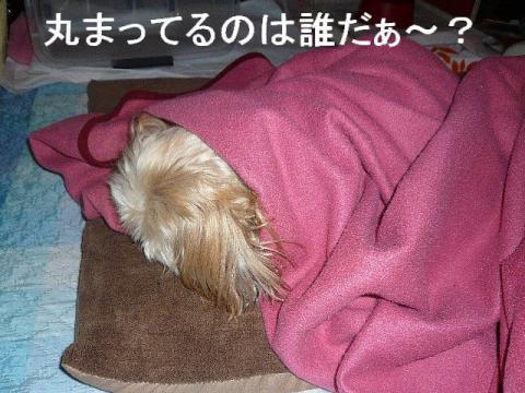 bibi_20081124_1