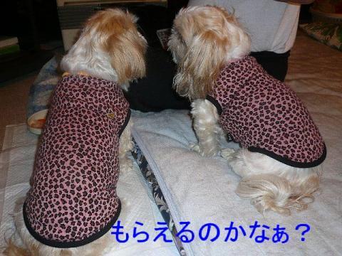 bibimint_20081125_3