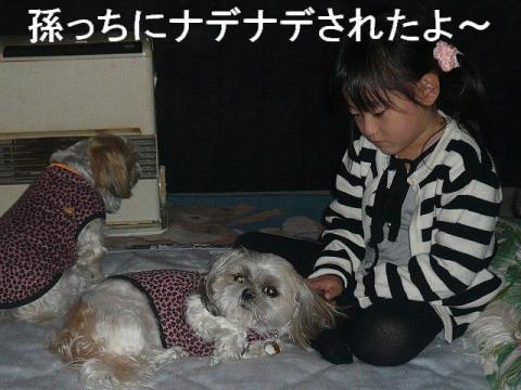 mint_20081125_1