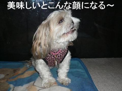 mint_20081128_2
