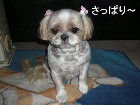 bibi_20081201_1