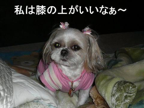 mint_20081204_1