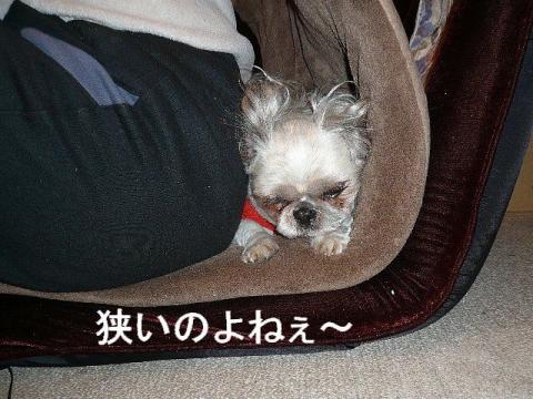 love_20081215_3