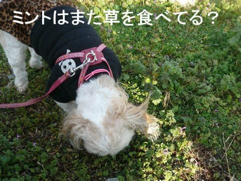 mint_20081214_2