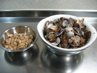 貝の成れの果て。