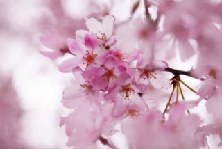 spring_flower00