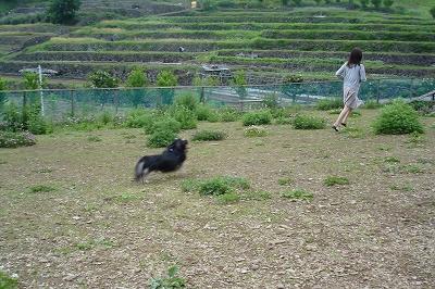 s-hasyagunohaitsumowatashidake.jpg
