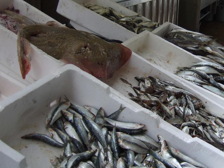 411Porto Bolhao市場魚屋