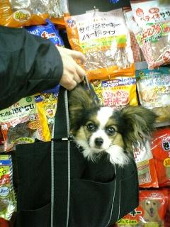bag.in.jpg