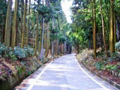 醒ヶ井宿方向の杉林
