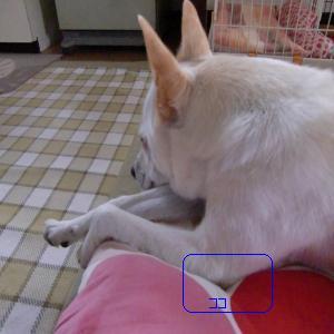 CIMG0770_convert_20090702130942.jpg