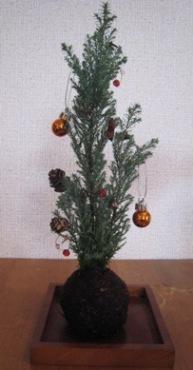 2007クリスマス苔玉