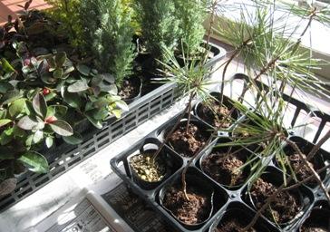 2007冬植物①