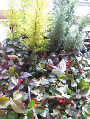 2007冬植物②