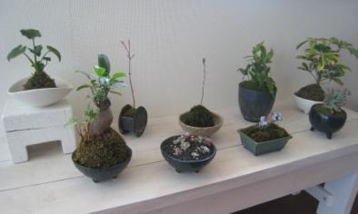 2008春苔盆たち