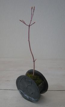 2008苔盆もみじ