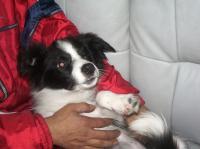 愛犬 027