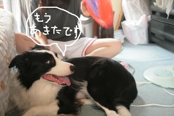 fer+akita_convert_20080926130032.jpg