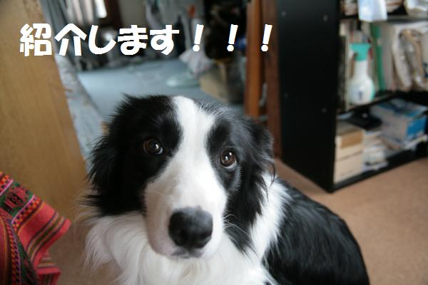 fer+syokai_convert_20080928112229.jpg