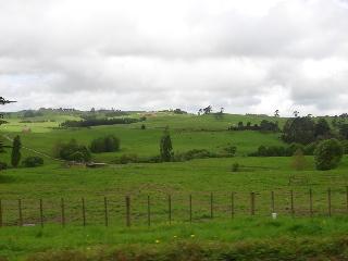 NZ田園風景