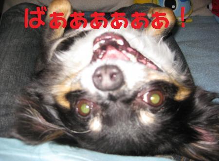 1355_convert_20090523184153.jpg