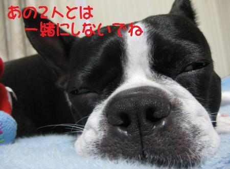 1358_convert_20090523184118.jpg