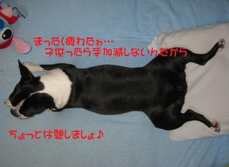 1380_convert_20090526083722.jpg