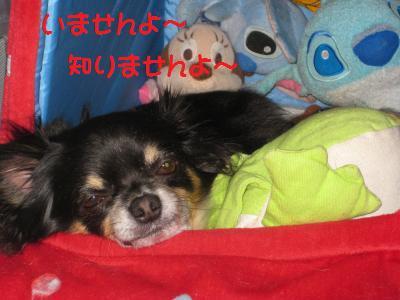 IMG_1009_convert_20090428093121_ken.jpg