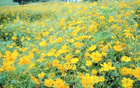 花・植物1