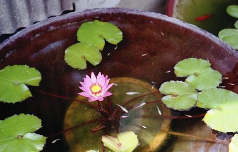 花・植物2