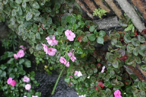花・植物5