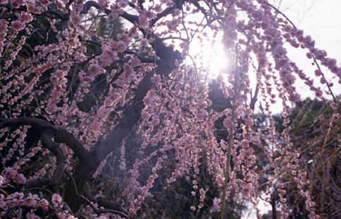 花・植物9